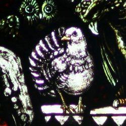 17th The Turtle Dove